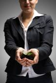 Businesswoman hands holding sprout — Stock Photo