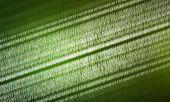 Binární kód pozadí — Stock fotografie