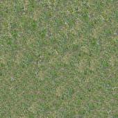 Grassplot met groene en vergeelde gras. — Stockfoto