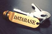 黄金のキーリングに書かれたデータベース. — ストック写真