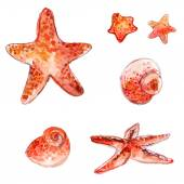 Set of hand drawn watercolor starfishes and sea shells. Artistic vector illustrations isolated on white background. — Stock Vector
