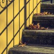 Stairway with fallen leaves — Stock Photo #62005679