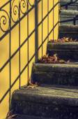 Stairway with fallen leaves — Stock Photo