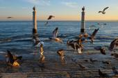 Columns Dock with many seagulls — Stock Photo