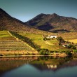 Douro Landscape — Stock Photo #63333837