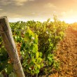 Landscape of countryside with vineyard — Stock Photo #80396874
