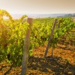 Landscape of countryside with vineyard — Stock Photo #80396880
