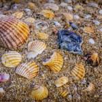Many colorful sea shells — Stock Photo #80396884