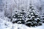 Winter forest with snow-covered trees and snowfall — Stock Photo