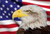 A beautiful bald eagle with a background of a usa flag — Stock Photo