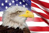 Uma bela águia careca com um fundo de uma bandeira dos estados unidos da américa — Foto Stock