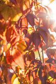 Autumn leaves in the sun — Stock Photo