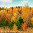 Autumn forest on the bank of the river — Stock Photo #55909781