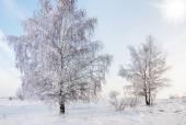 Landscape in snow against blue sky. Winter scene. — Stock Photo
