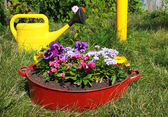 Ideas for garden - flowers in old wash-basin — Stock Photo