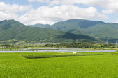 Green landscape in South Korea — Stock Photo