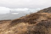 Arctic landscape in Greenland with icebergs — Stock Photo