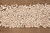 Pumpkin seed  lying on sackcloth between the lines — Stock Photo