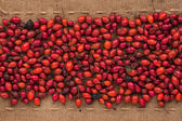 Rosehip lying on sackcloth between the lines — Stock Photo