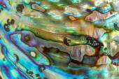 Close up Background of blue, green and purple abalone pearl shel — Stock Photo