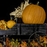 Fall Pumpkins — Stock Photo #53535233