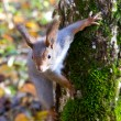 Curious squirrel near the tree — Stock Photo #60942467