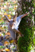 Curious squirrel near the tree — Stockfoto