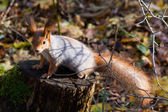 Curious squirrel near the tree — Stock Photo