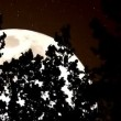 Forest and a Huge Sepia Moon — Stock Video #53357565