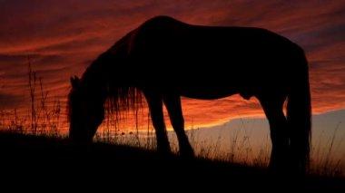 Horse Backlit Sunset. — Stock Video