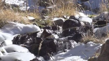 Water in Freezing Creek. — Stock Video