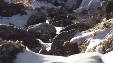 Water in Freezing Creek. — Vídeo Stock