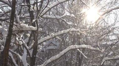 雪花在树枝 — 图库视频影像