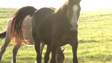 Mares in Bright Sunlight. — Stockvideo
