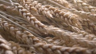 Stages of Origin of Flour. — Stock Video