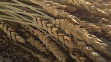 Espigas de trigo, grão e farinha — Vídeo stock