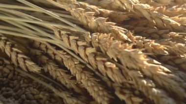 Ears of Wheat, Grain and Flour — Stock Video