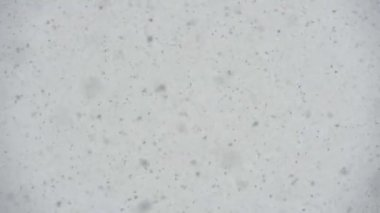 Large Flakes of Snow — Stock Video