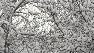 Floresta de inverno e neve — Vídeo stock