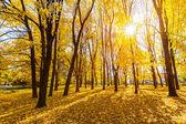 Parque ensolarado de outono — Foto Stock