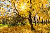 Sunny autumn park — Stock Photo