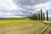 Idyllic Tuscan landscape with cypress alley near Pienza, Val d'Orcia, Italy — Stock Photo