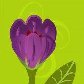 Crocus flower illustration draw — Stock Photo
