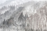 Snowfall with forest — Stock Photo