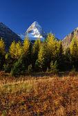 Mountain scene in autumn — ストック写真