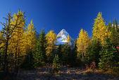 Mountain scene in autumn — Stock Photo