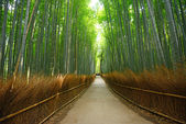 Bamboo groove — Stock Photo