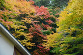 Colorful maple with roof — Stock Photo