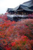 Fall gebladerte in kyoto — Stockfoto