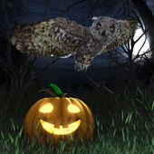 Halloween pumpkin and owl in night forest holiday background — Stock Photo